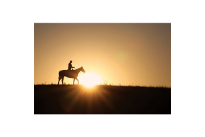 Pitzer Ranch Fall Horse Sale